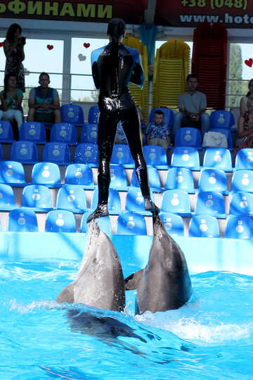 Girl with Dolphins №25137