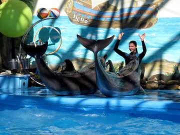 Girl trainer marine animals №25169