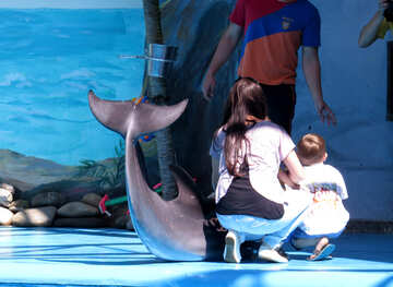 Photo with dolphin №25515