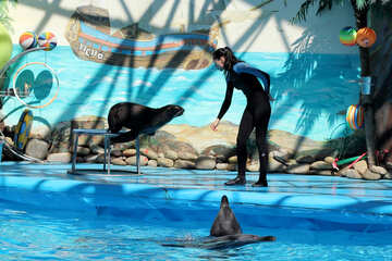 Circus with dolphins №25281