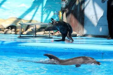 Circus with marine animals №25226