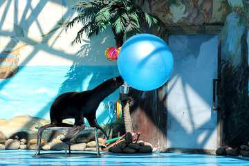 Circus with marine animals №25231