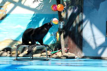 Circo con animali marini №25233