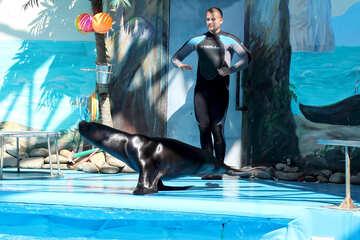 Circo con animali marini №25236