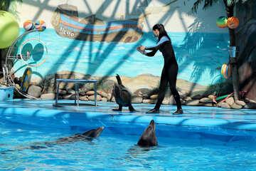 Circus with marine animals №25284