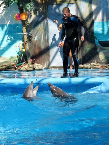 Man trainer marine animals №25181