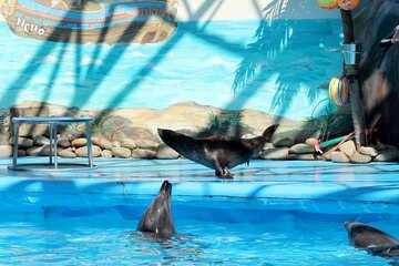 Attori del circo animali marini №25280