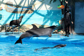 Playing with dolphins №25290
