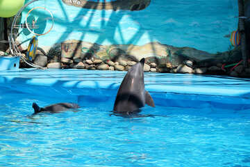 Trained dolphins №25298