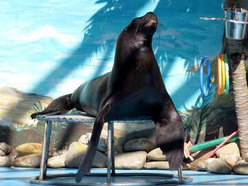 Sea lion №25391