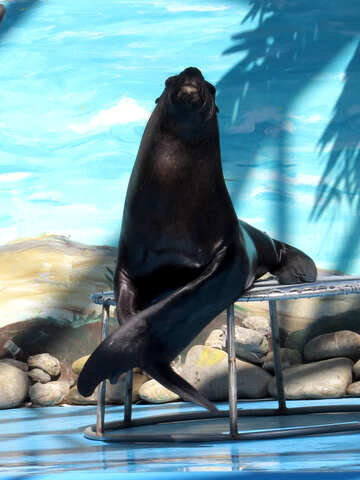 Sea lion in the circus №25400
