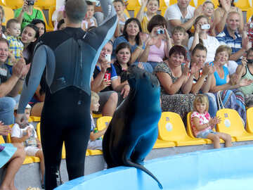 Sea lion in the circus №25402