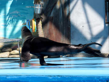 Sea lion dancing №25382