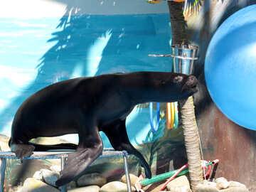 Sea lion plays Ball №25386