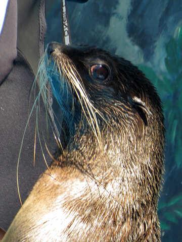 Seal №25419