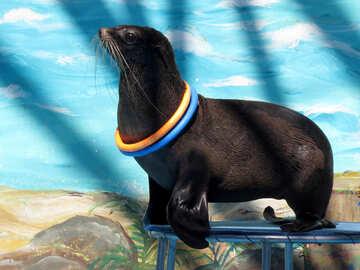 Seal №25428