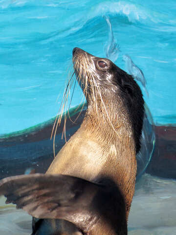 Seal №25431