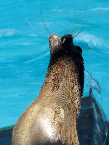 Seal №25432