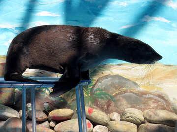 Seal №25434
