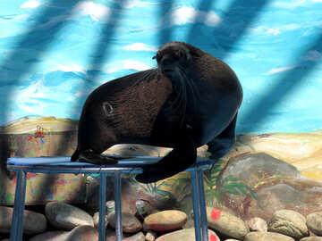 Seal №25452