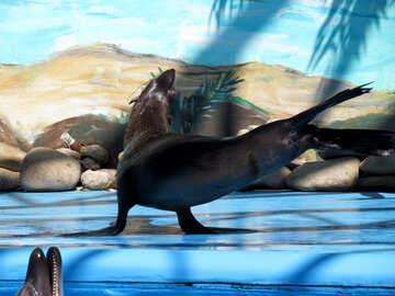 Seal dancing №25462