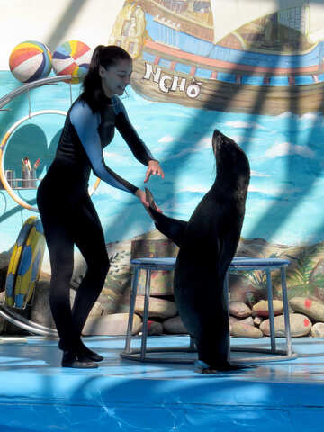 Seal dancing with trainer №25418