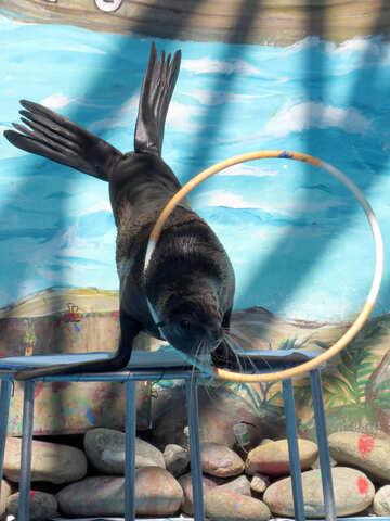 Seal with hoop №25425