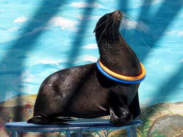 Seal with hoop №25429