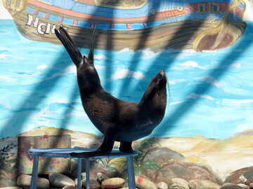 Trained seal №25471