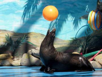 Seal and ball №25457