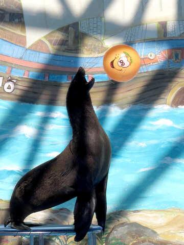 Seal plays Ball №25455