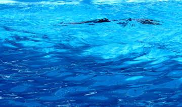 Ombra in acqua №25160