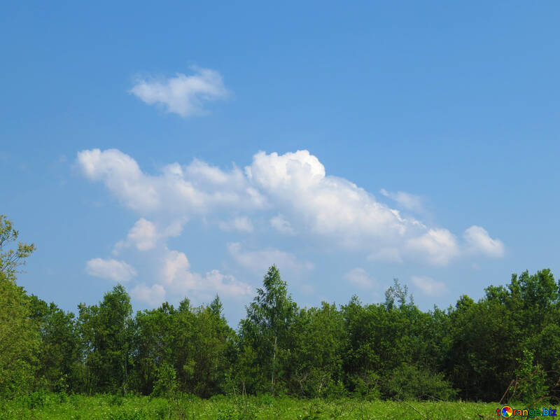 Background of beautiful nature №25060