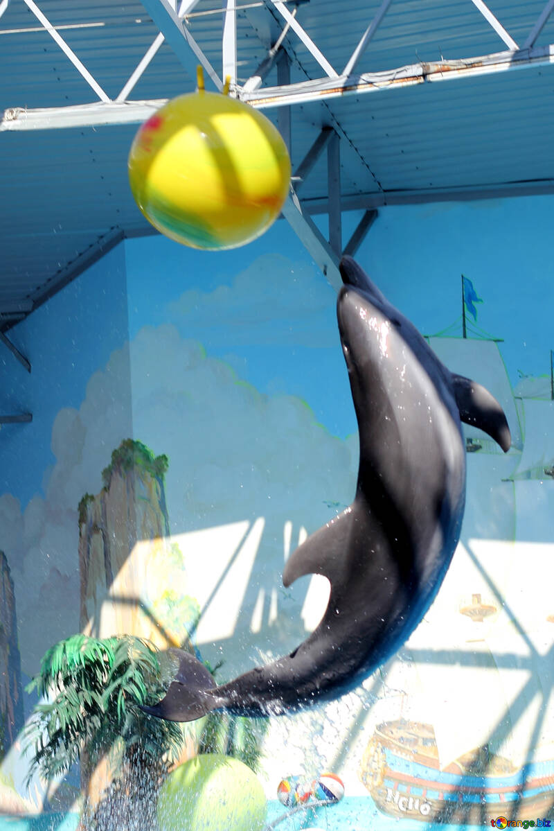 Cheerful dolphin №25553