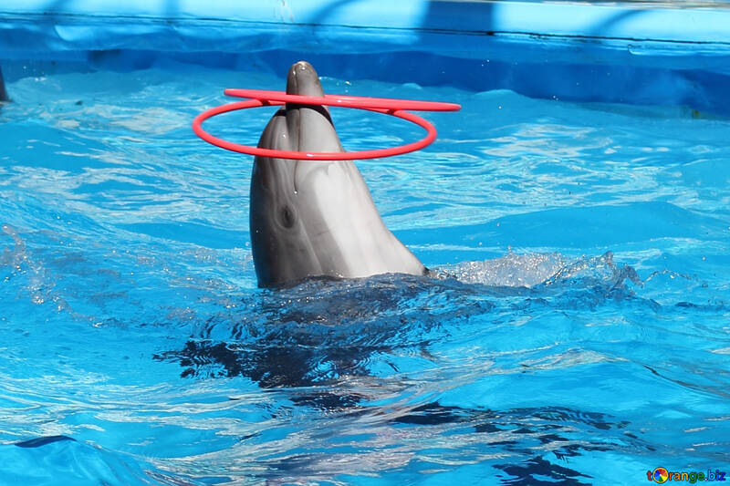 Dolphins playing №25528