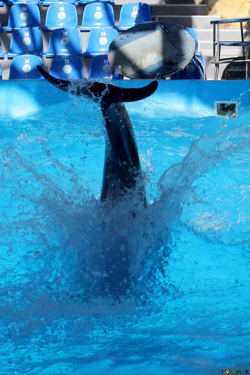 Splashes from jumping dolphin №25565
