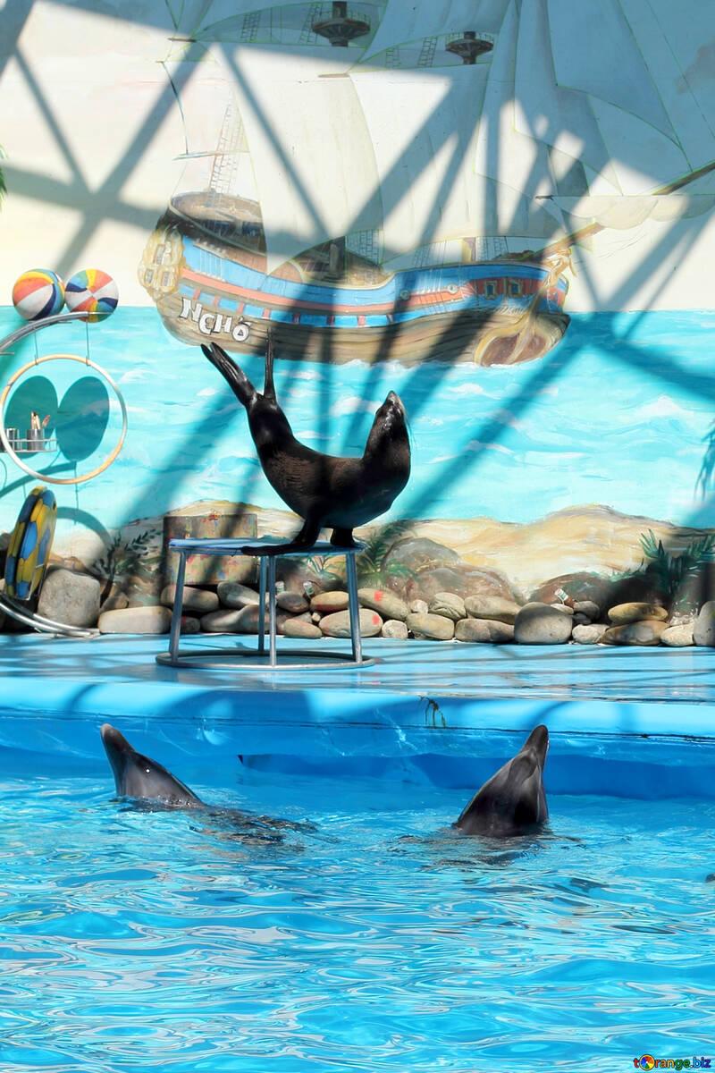 Show in marine animals №25287