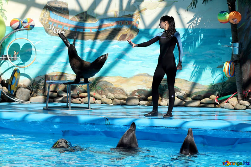 Show in marine animals №25288