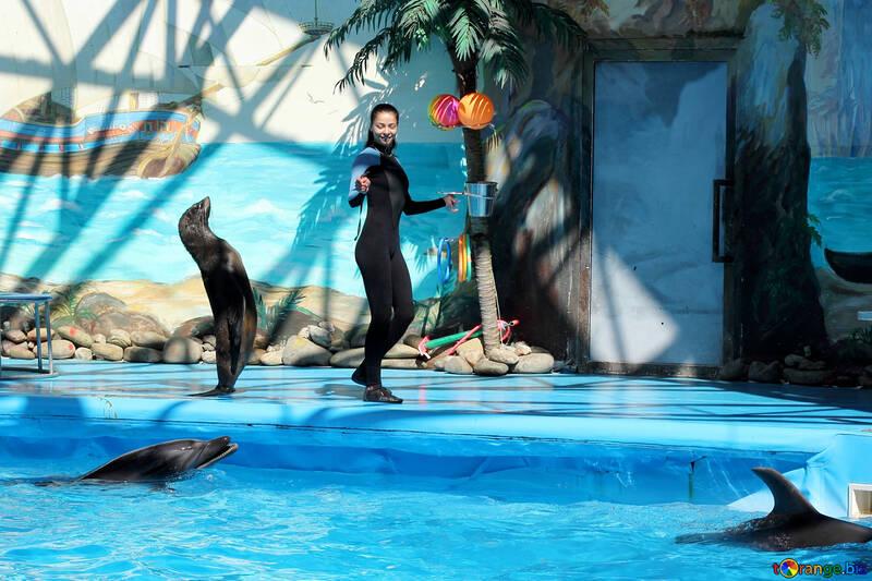 Shows with marine animals №25249