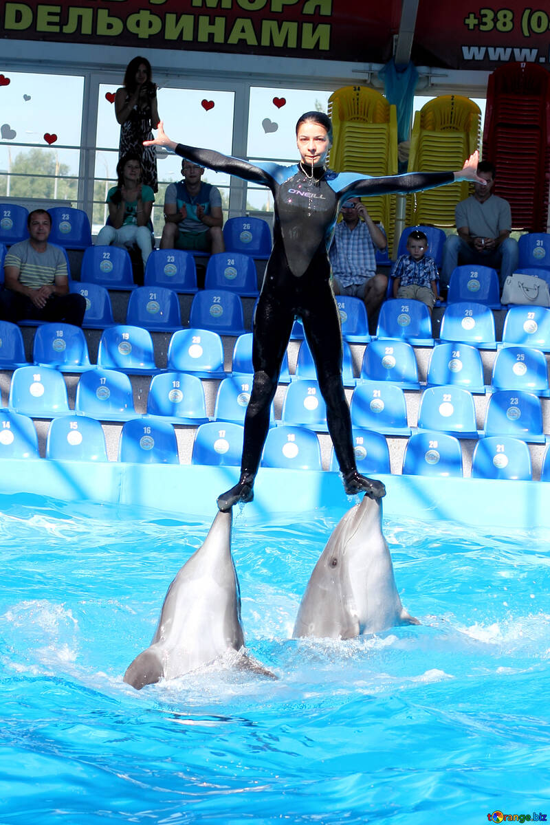 Dolphin trainer №25133