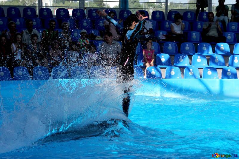 Diversión con delfines №25150