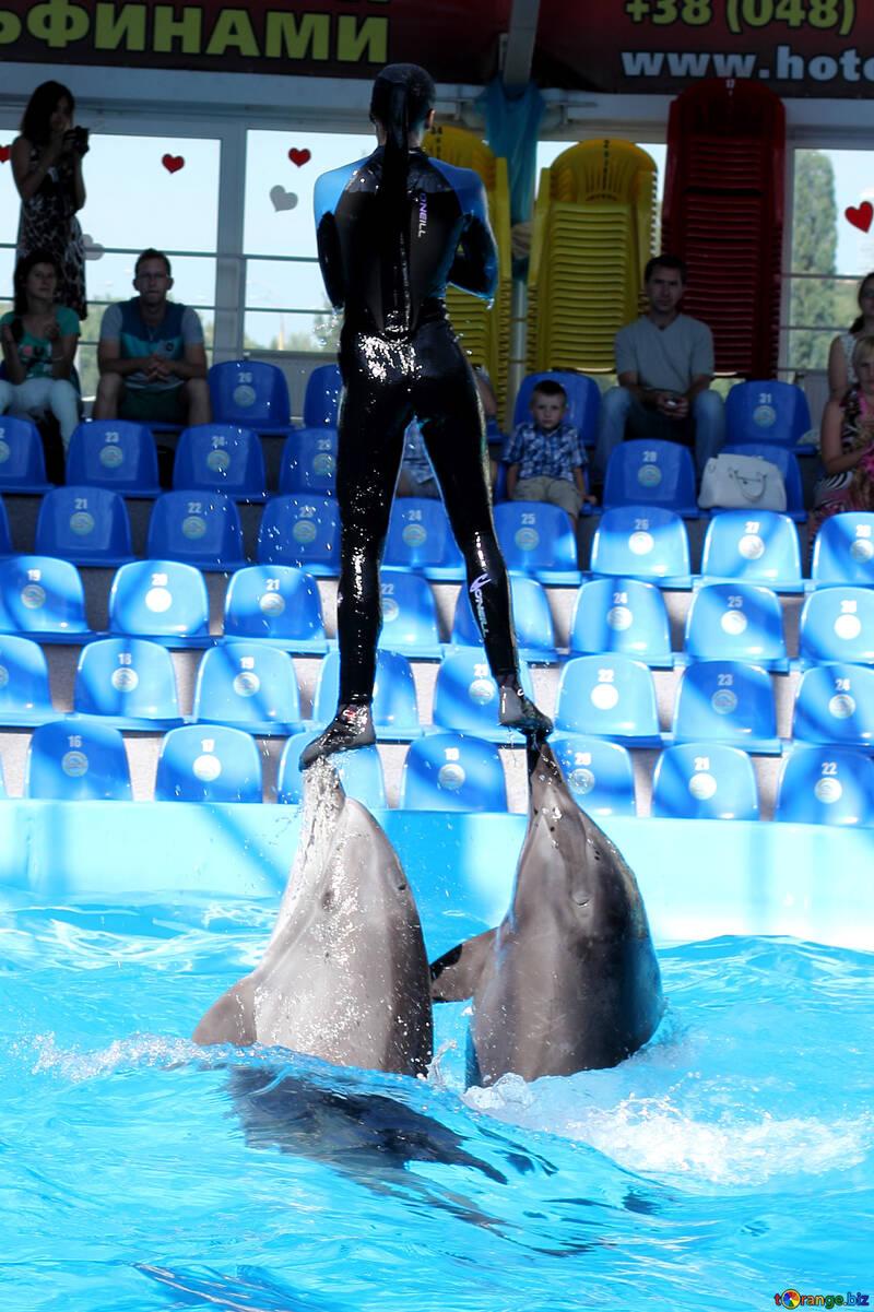Chica con delfines №25137