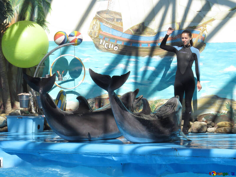 Trained dolphins №25359