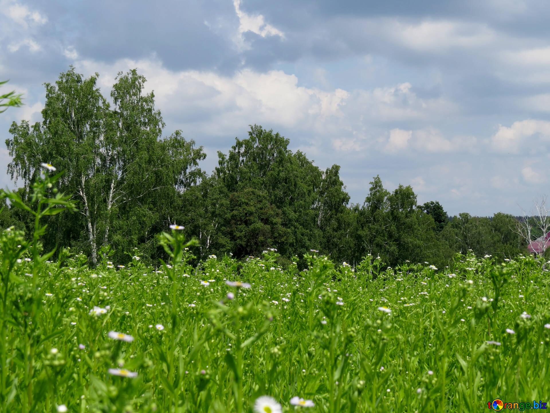 beautiful nature bright nature field № 26749