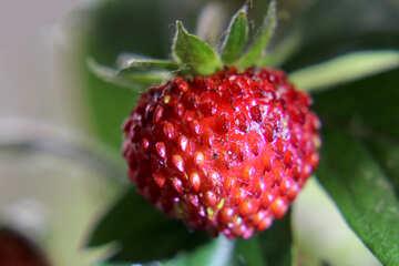 Sweet wild berry №26018