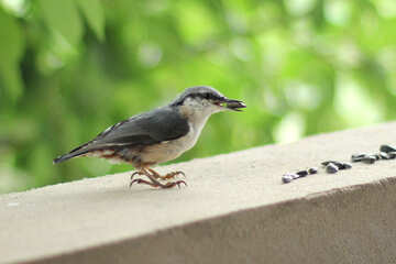 Bird eating grain №26813