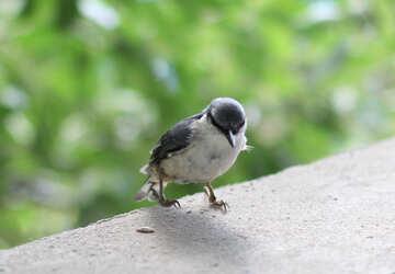 Funny bird №26799