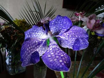 Beautiful bouquet №26636