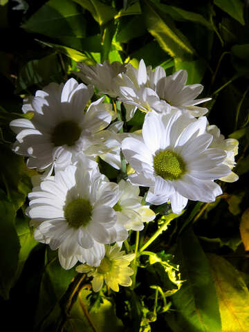 Bouquet di margherite №26590