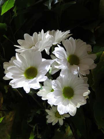 Glowing bouquet №26594